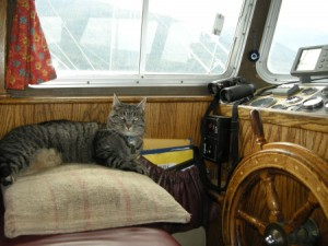 Bear the Boat Cat at the Helm