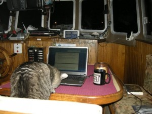 Bear the Boat Cat as Ghostwriter